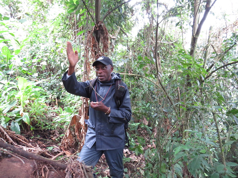 Jackson Kabuyaya Mbeke holds a compass and points in a direction ahead of him within the forest.
