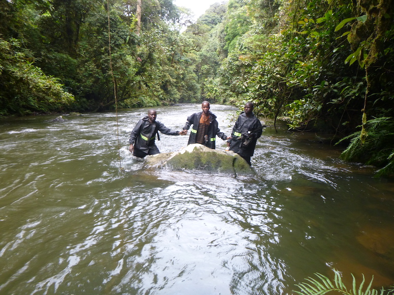 Three members of a great ape survey team hold hands in a line as they cross a river with water up to their thighs.