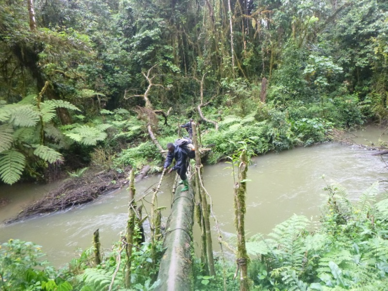 Great ape survey team members walk carefully over a log placed across a river.