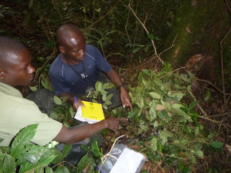 Two great ape survey team members point to the center of a great ape nest on the ground.