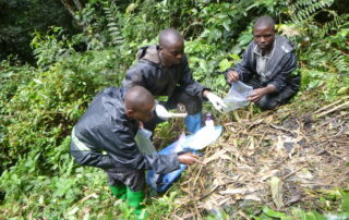 Three great ape survey team members collect fecal samples from a nest.