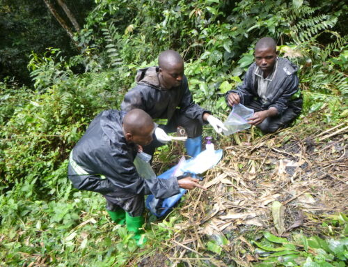 Great Ape Survey in Tayna Nature Reserve